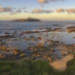 Castaway Norfolk Island - Nepean & Phillip Islands