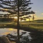 Castaway Norfolk Island - Norfolk Island Pine